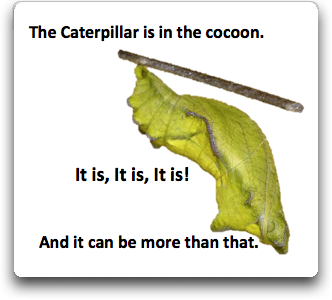 caterpillar-in-cocoon-more-than-that-words