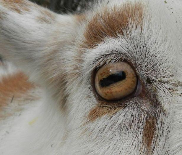 rectangular-eye